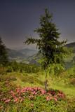 Spiessnägel Trek: Tree and Alpine Roses