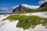 Flakstad Island: Vikten: Beach with Mountains and Clouds