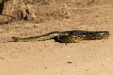 Anaconda Crossing Transpantaneira