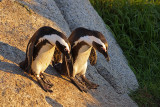 Boys Are Back From Bar (Jackass Penguins)