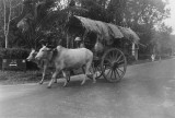 Oxcart Taiping 1947