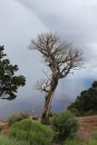 Grand Canyon       Desert View