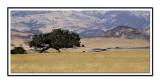 Santa Ynes Valley CA