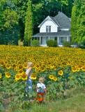 Elk River, MI Sunflowers, Barn, KIds