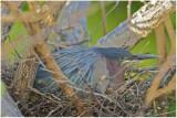 lgh on nest