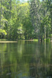 Ichetucknee River midway
