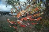 c Wind Middlebury 10-29-07 63.jpg