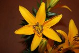 YELLOW LILY AT HOME
