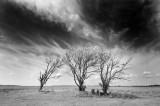 The 3 Trees of Tivoli