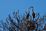 Rookery_cbarbour_MG_0760.jpg