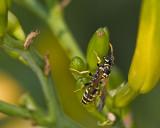 hang 10 hornet