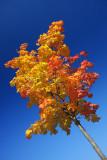 Autumn 2008 (2)