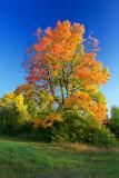 Autumn 2008 (8)