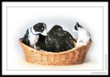 SPCA_6835.jpg