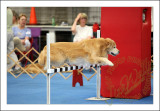 Aug 23rd 2009 - AKC Indoor Obedience and Rally Trial