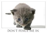 gray tux kitten_9430.jpg
