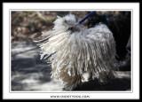 photos taken at the 2009 SPCA Walkathon