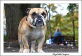 SPCA Adoption Extravaganza - October 10 and 11 2009