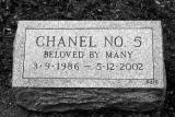 chanel5