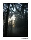 Forêt des Cadolles en automne