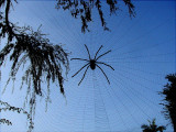 How To Make A Big Spider Web For Halloween! GALLERY