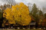 Fall 2010 Smoky Mountains TN