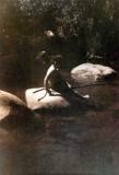 Kodacolor print 1944