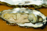 7/5/2010  Oyster