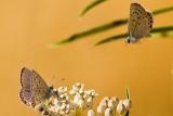 7/7/2010  Butterflies