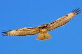 7/31/2010  Hawk