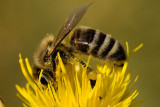 8/11/2010  Bee