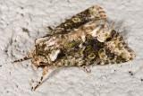 9/5/2010  Moth