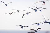 9/20/2010  Seagulls