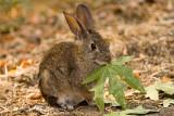 9/21/2010  Rabbit