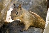 9/23/2010  Squirrel