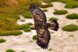 10/27/2010  Golden Eagle