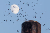 9/26/2012  Moon, Birds and Chimney