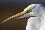 What's that on my beak? _MG_2805.jpg