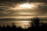 Clear Lake sunrise_MG_5359.jpg