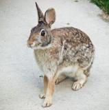 Rabbit on concrete.jpg