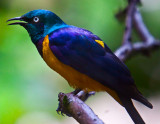 Bright & Blue Bird_MG_4605.jpg