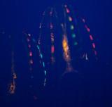Neon Jellyfish _MG_1303.jpg