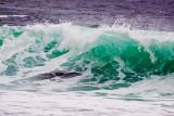 Green wave _MG_6101.jpg
