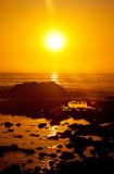 Ocean gold _MG_4023.jpg