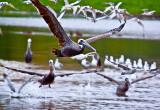 Lots of birds  _MG_4514.jpg