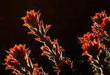 Sunset flowers  _MG_4267.jpg