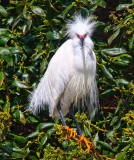 Bad feather day _MG_2674.jpg