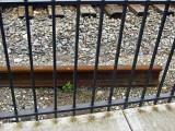 Behind bars .jpg