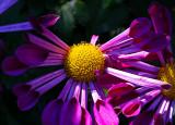 Yellow and Purple .jpg