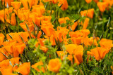 Orange _MG_0244.jpg